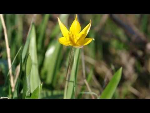 Лесные и степные цветы в начале мая