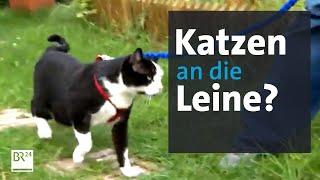 Zum Schutz Der Vögel: Leinenpflicht Für Katzen?   BR24