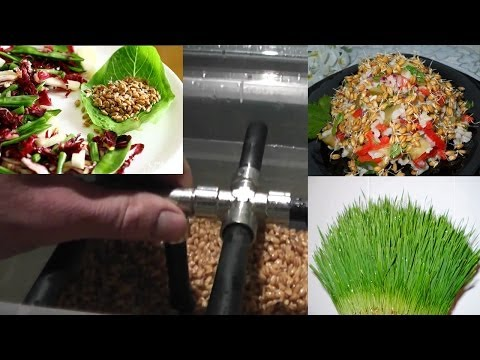 Компания ЗерноФФ - продажа зерна и комбикормов.