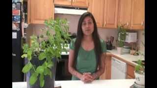 How to Grow Mint  - Pudina - Gardening by Bhavna