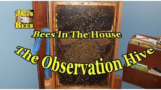 Bees In The House/ The Observation Hive