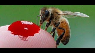 видео Как получают натуральный мед