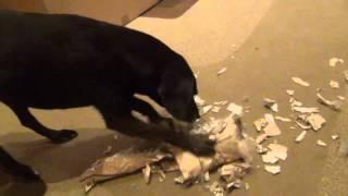 Zabawka dla psa | trudna wersja | prezent od Zuzy i Figi :)