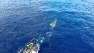 Проект по очистке океана завершает исследование большого тихоокеанского мусорного пятна