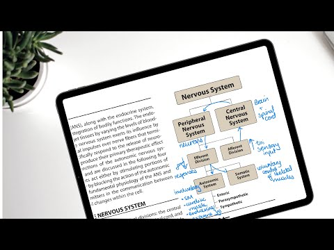 GoodNotes 5 As A PDF Reader: EVERYTHING  You Need To Know