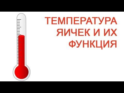 Температура яичек и их функция / Доктор Черепанов