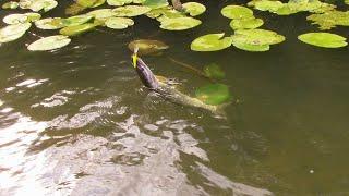 Сплав по реке Медведица  29 дней одиночного плавания 5 ЧАСТЬ