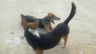 សត្វឆ្កែ - Dogs - Cute Dogs - Dogs Playing - Dogs Videos - Funny Dogs