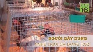 Mô hình nuôi gà Đông Tảo - Cách nuôi gà đông tảo thu tiền triệu mỗi ngày