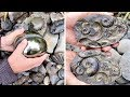 Guy Finds Ancient Golden Fossils