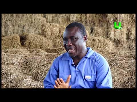 AYEKOO: Animal  Husbandry  In Ghana | 2018