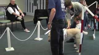 Ellie's First Guide Dog Experience