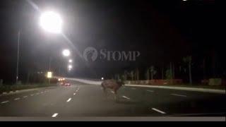 25nov2018 wild deer spotted on the new lornie highway