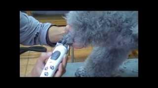Umfangreiche und professionelle Hundepflege bei Hundefriseur-Wien