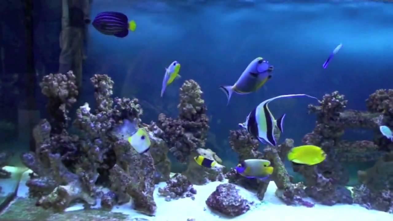 Marine Fish Community Tank   YouTube