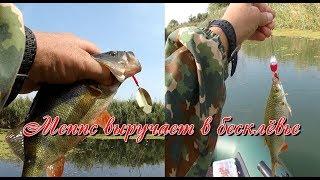 Рыбалка на спиннинг. Меппс выручает в бесклевье