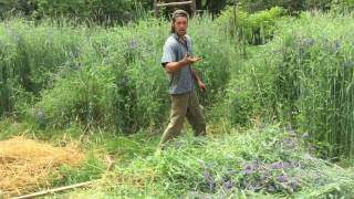How to Cut Cover Crops