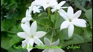 الفنان نوري كمال يا زهرة الياسمين