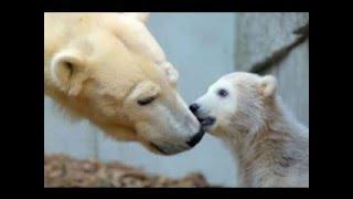 В мире животных!