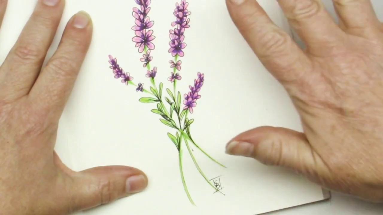 pen and ink drawing tutorial how to draw lavender flowers