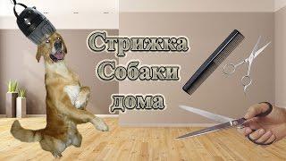 Как подстричь собаку? Стрижка Голден-ретривера дома.
