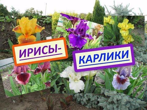 [НУЖНО ЗНАТЬ: 029] Где купить недорогие цветы к 8 марта?из YouTube · С высокой четкостью · Длительность: 3 мин6 с  · Просмотров: 519 · отправлено: 05.03.2015 · кем отправлено: НУЖНО ЗНАТЬ360