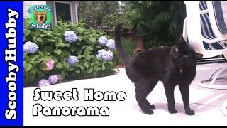 Sweet Home Panorama -- Cat Clips #315