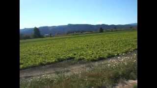 Собераем ежевику возле Портленда, штат Орегон, США(любительское видео на тему отдыха на природе, всем привет и благословений!, 2012-09-04T02:05:00.000Z)