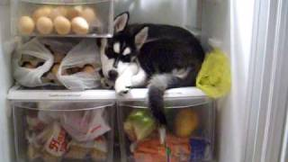Luna Loves The Fridge