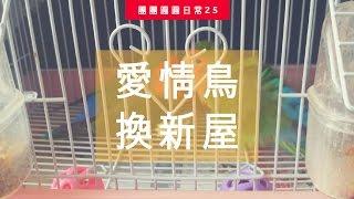 愛情鳥新年換新屋 | 團團圓圓生活日常#25