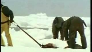 Мартин Шин — Убийство тюленей(, 2011-06-30T09:18:08.000Z)