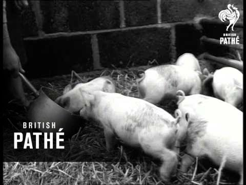 Pigs And Poodles (1952)