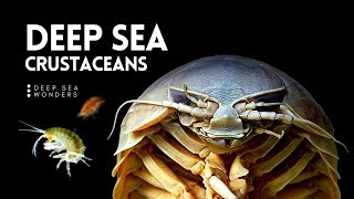 Crustaceans, the 'Insects' of the Deep Sea