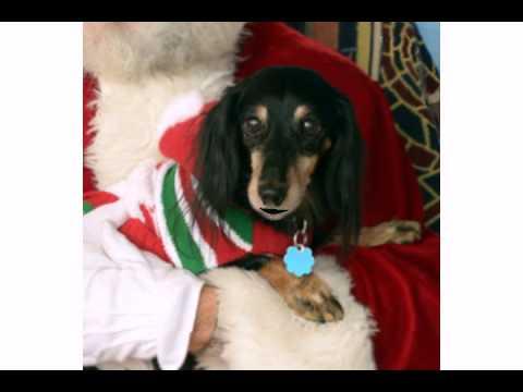 Funny Christmas Carols - I Want A Hippopotamus For Christmas (Dumb Ole Kitty Cat)