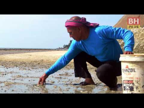 BHPLUS: Gamat Langkawi dari Siam