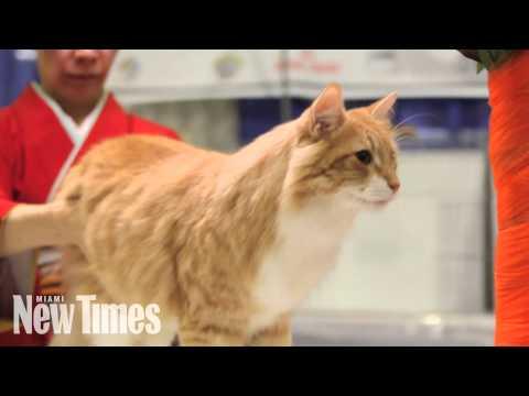 2014 World Cat Congress