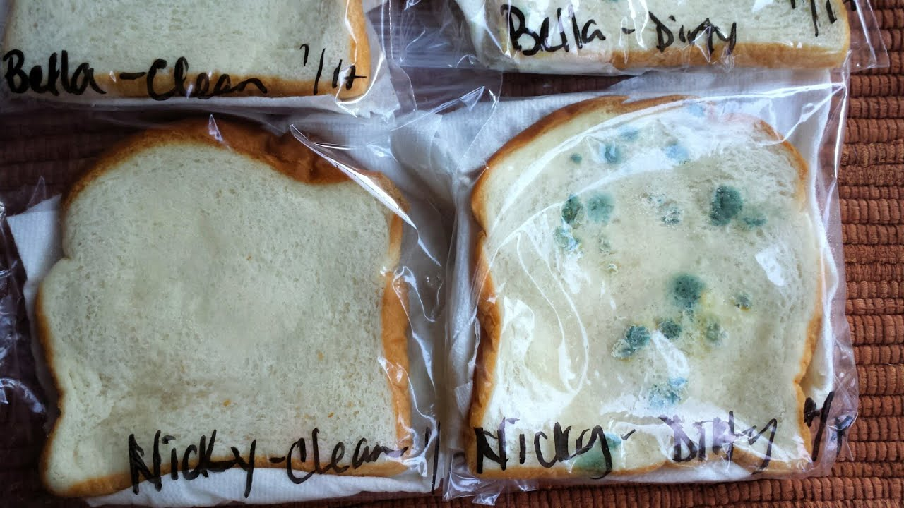Moldy Bread Science Experiment Wash Your Hands