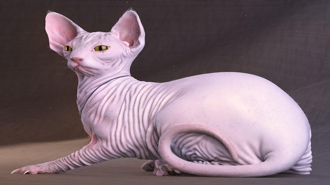 أغلى 10 قطط في العالم Youtube