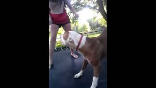 Repeat youtube video RAPE !!!!!!!!!!!!!!!!!!!!! By a dog