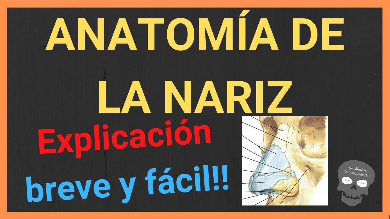 Download Anatomía de la nariz 👃(EXPLICACIÓN BREVE Y SENCILLA!)