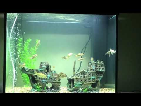 Juwel Lido 200 | Goldfish