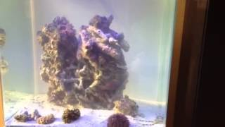 Innovative Marine Nuvo 30 Gallon White Aquarium, Sun Shimmer