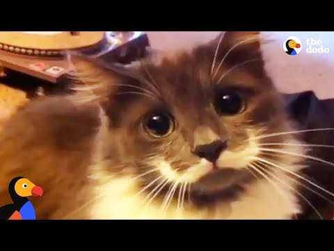 Hipster Cat Has The COOLEST Mustache | The Dodo