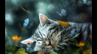 6 Hours of Deep Sleep - Harmonious Sleep Music Delta Waves The Deepest Sleep