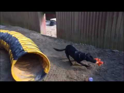 Dogs Trust Glasgow - Jake