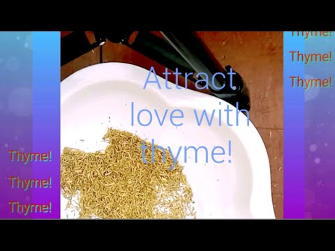 Download Powerful power of thyme
