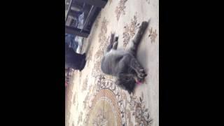 Эпик!! Коты и валерьянка,драка!!!