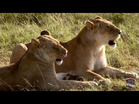 Kenya Self Drive Safari 2016: Masai Mara - Nakuru - Bogoria - Naivasha - Nairobi   GoPro & Nikon