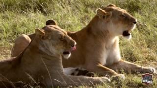 Kenya Self Drive Safari 2016: Masai Mara - Nakuru - Bogoria - Naivasha - Nairobi | GoPro & Nikon