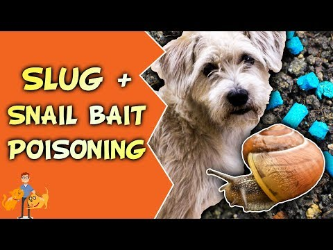 Slug and Snail Bait Poisoning in Dogs + Cats (shake + bake your pet)